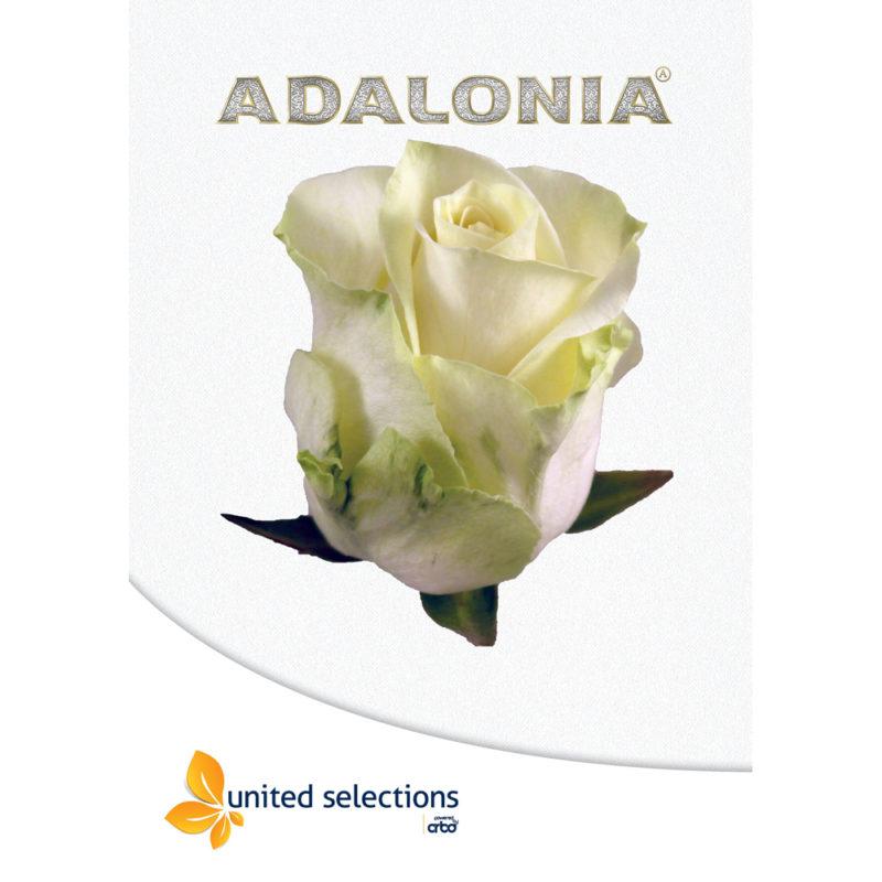 Adalonia