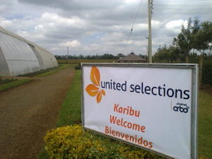 United Selections open day in Nakuru