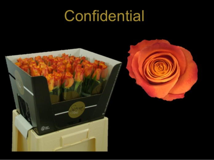Confidential introduction by Siera Flora