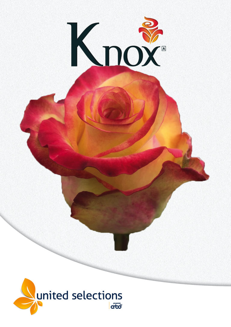 Introduction of Knox by Bloomingdale