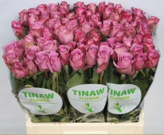 Tinaw Flower Introduces New Orleans on 28-04-2017