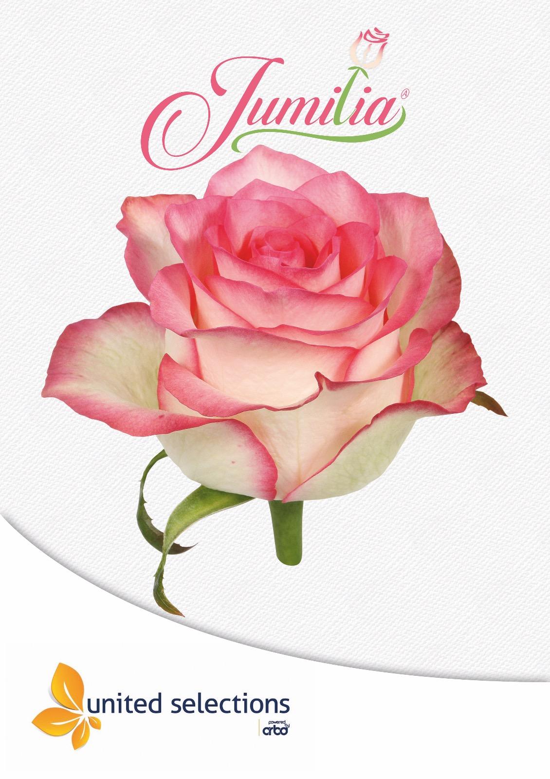 Jumilia poster