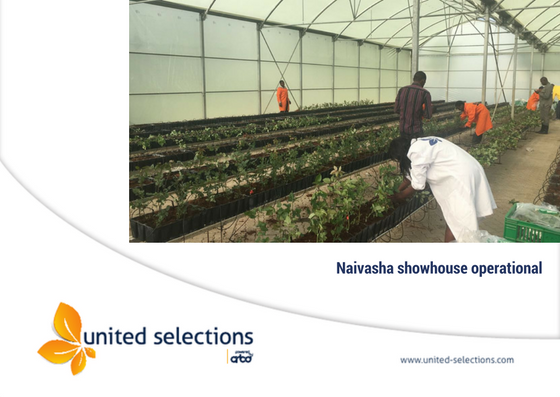 United Selections showhouse in Naivasha