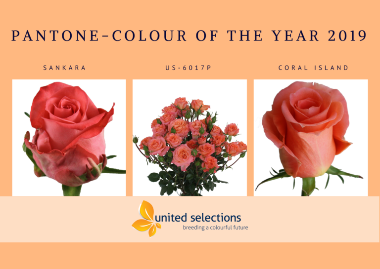 Pantone Colour of the Year 2019 is Living Coral (16-1546)