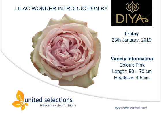 Lilac Wonder Introduction by Diya