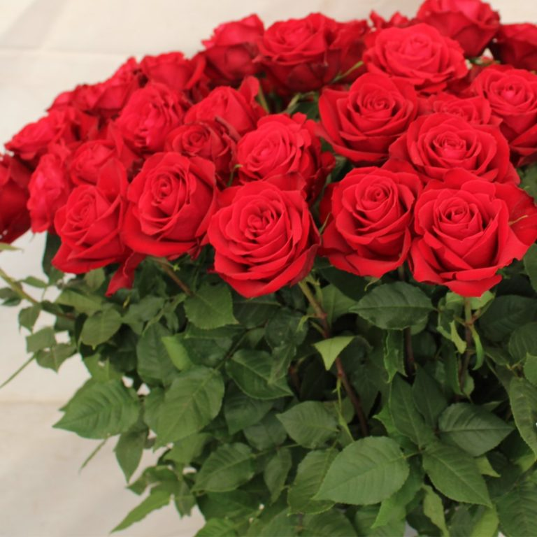 Madam's Family Roses – What Makes them Really Awesome?