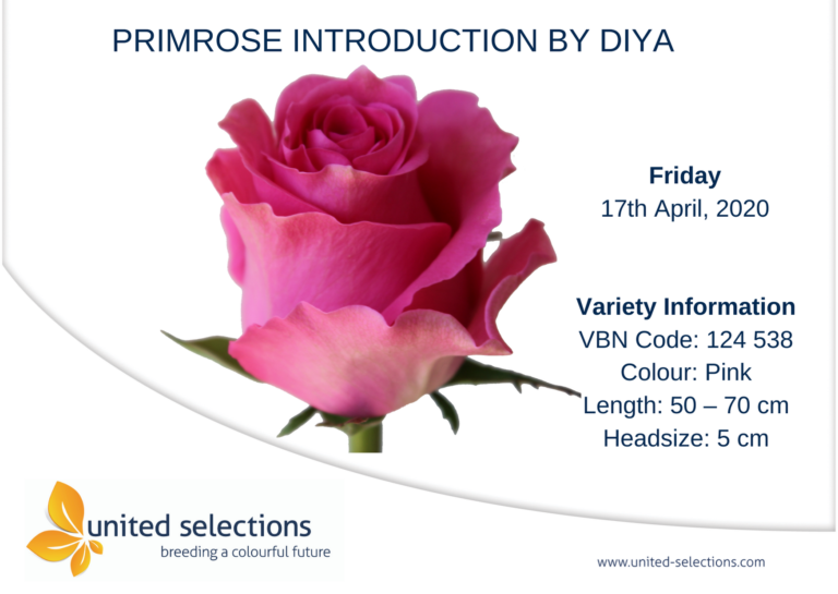 Primrose Introduction by Diya to the Auction
