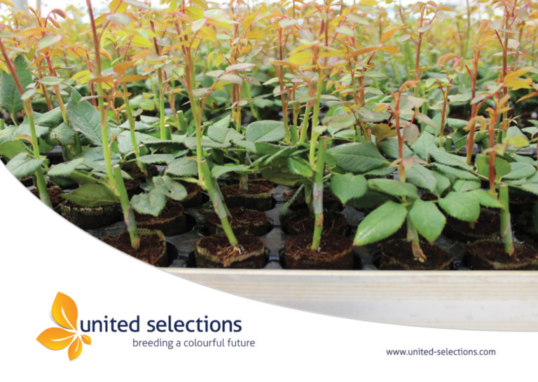 Quality and Pest Free Plants form our Propagation