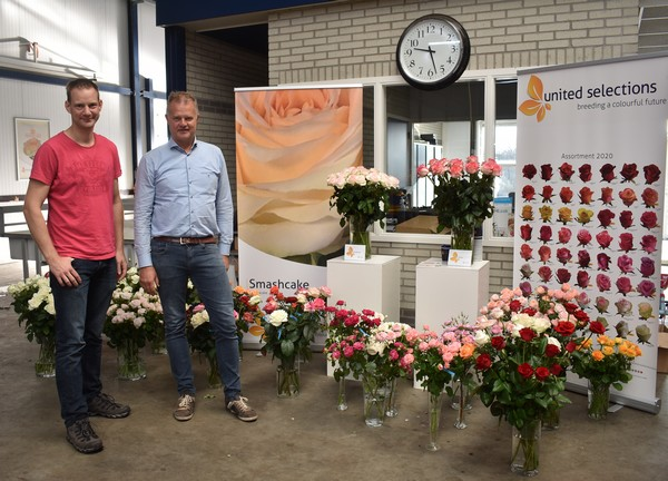 Our Rose Trials and New Varieties at Dutch Grower J&K Rosa