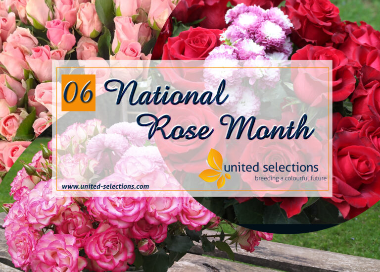 Celebrate National Rose Month with our Colorful Selections