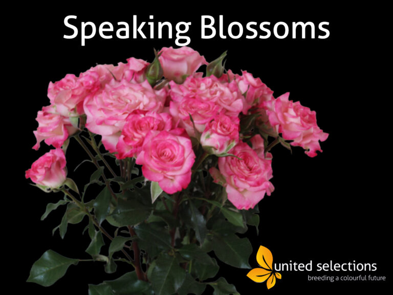 Speaking Blossoms Available Weekly at the Clock