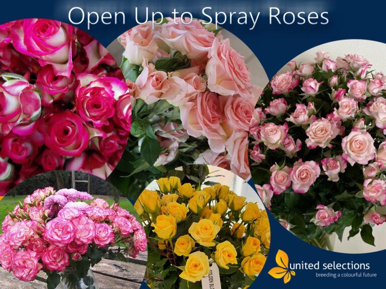 Time for Spray Roses